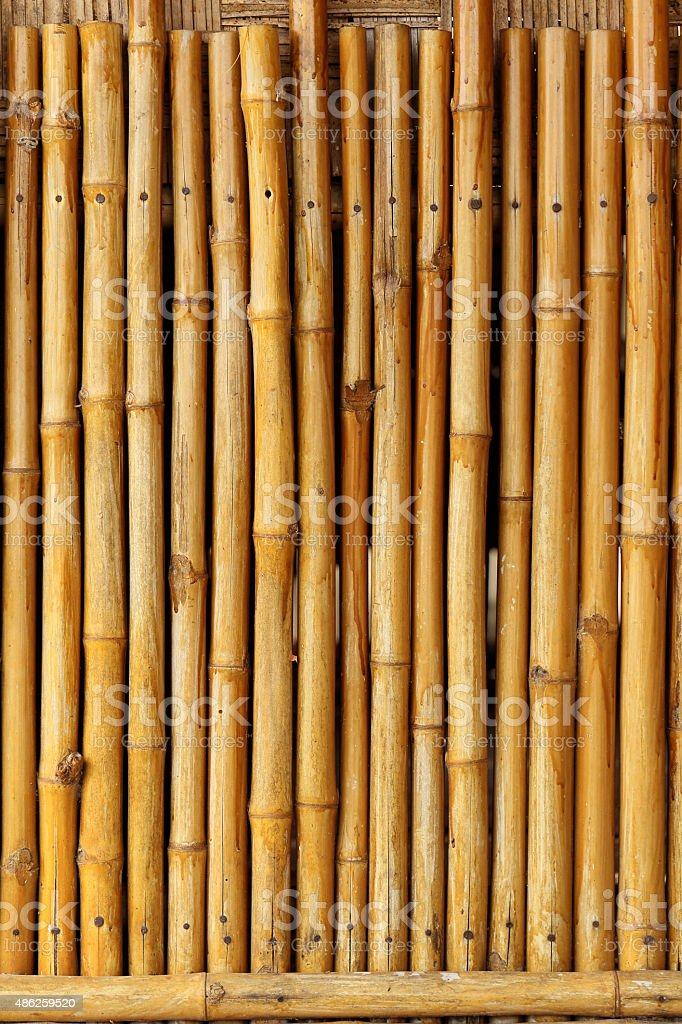 Golden bamboo fence background. stock photo