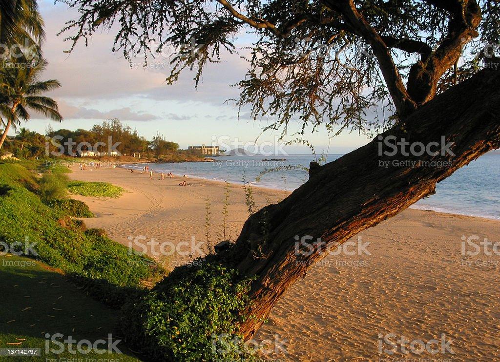 Golden Beach at Sunset, Maui, Hawaii stock photo