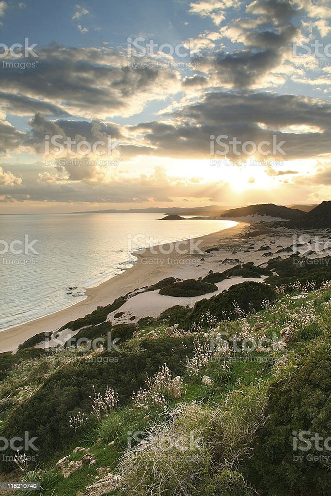 Golden beach with sunset and forests and ocean stock photo