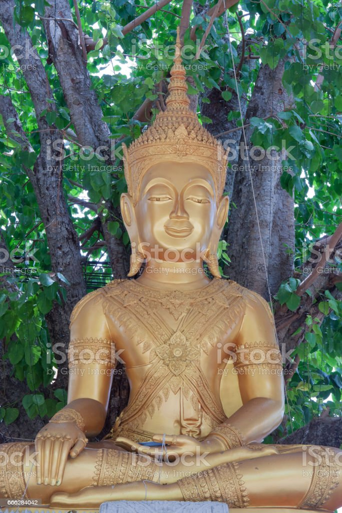 Golden big buddha statue under big tree in temple stock photo