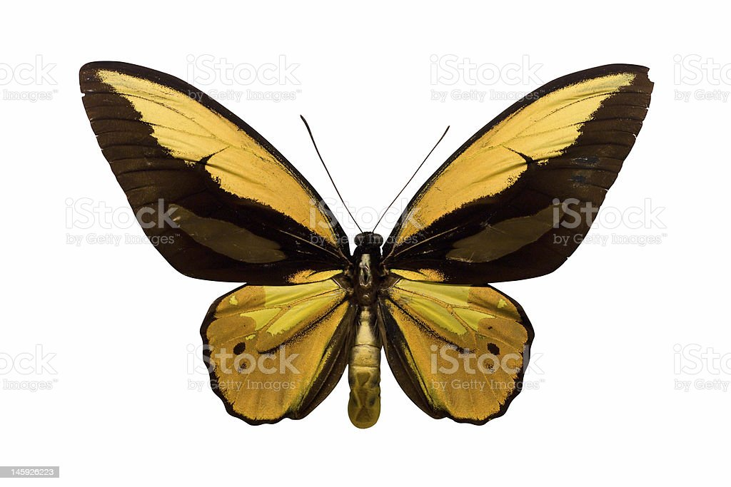 Golden Butterfly stock photo