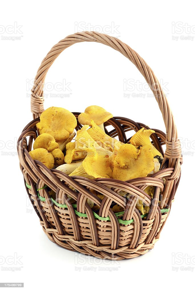 golden chanterelle mushroom (Cantharellus cibarius) in a basket stock photo