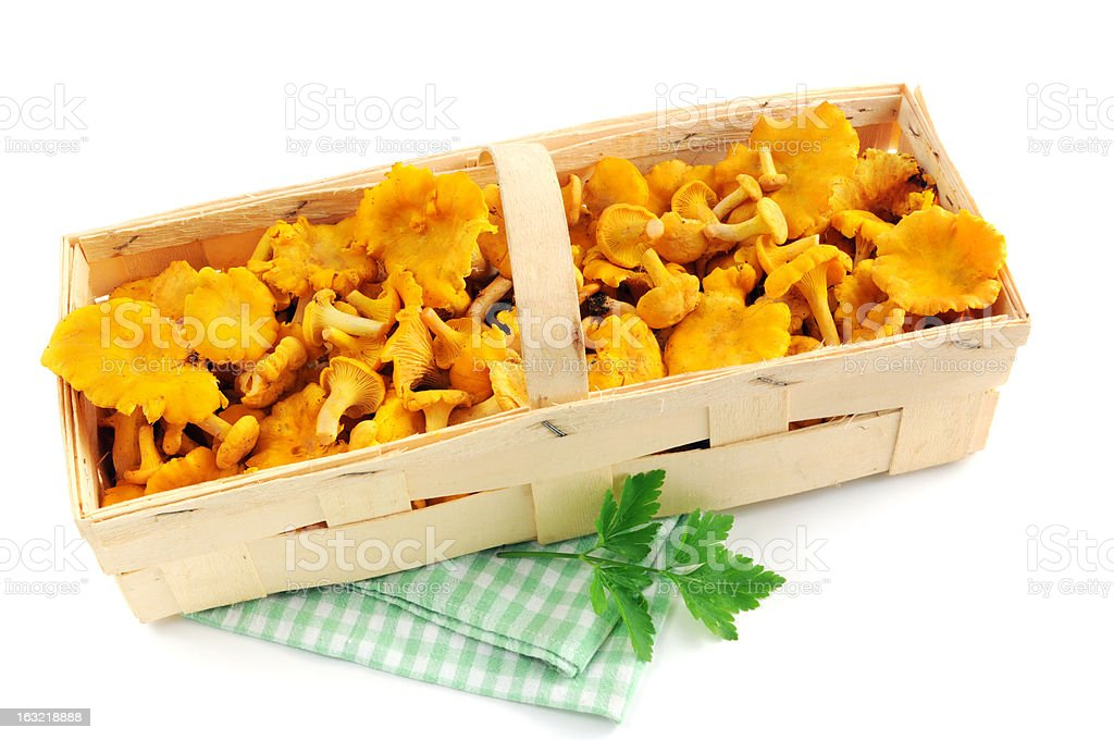 golden chanterelle mushroom (Cantharellus cibarius) in a chip basket stock photo