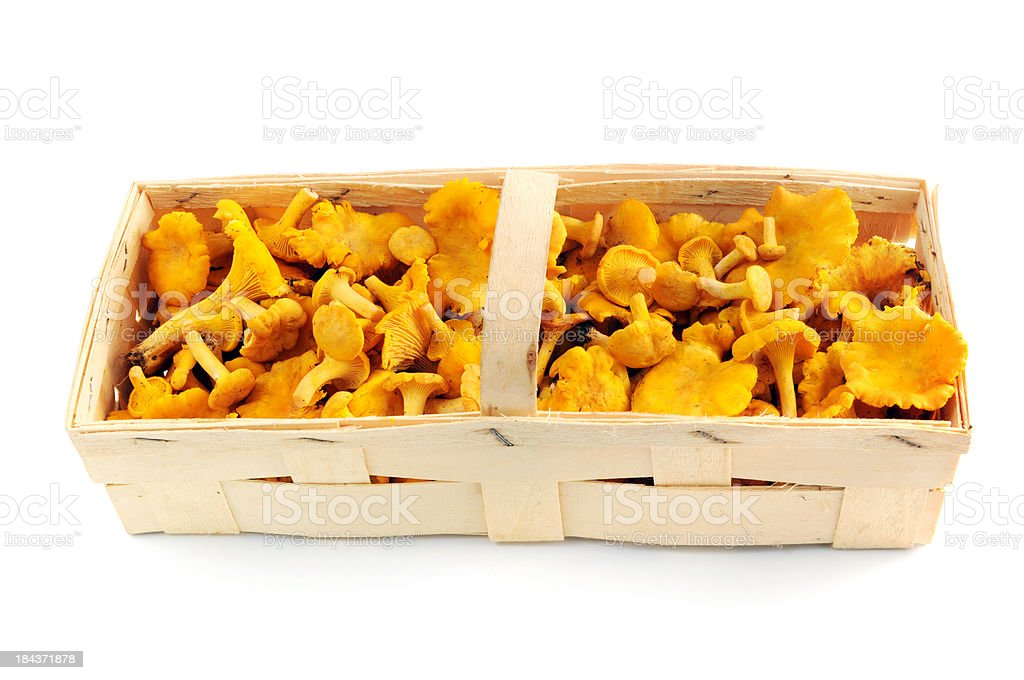 golden chanterelle mushroom (Cantharellus cibarius) in a chip basket stock photo