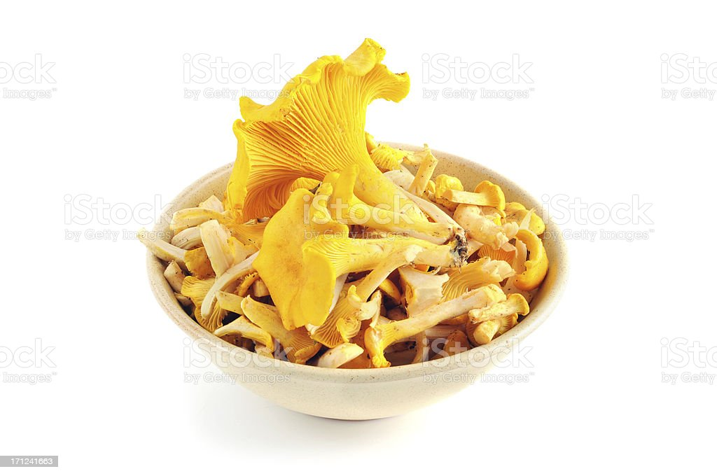 golden chanterelle mushroom (Cantharellus cibarius) in a cup stock photo