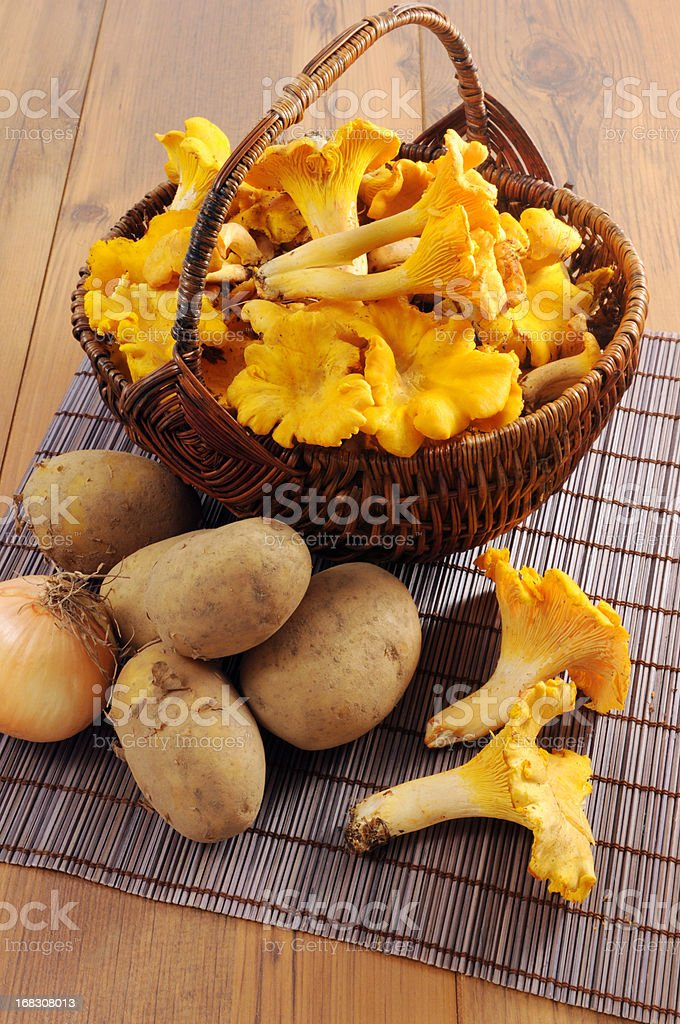 golden chanterelle mushroom (Cantharellus cibarius) in basket with potatoes royalty-free stock photo