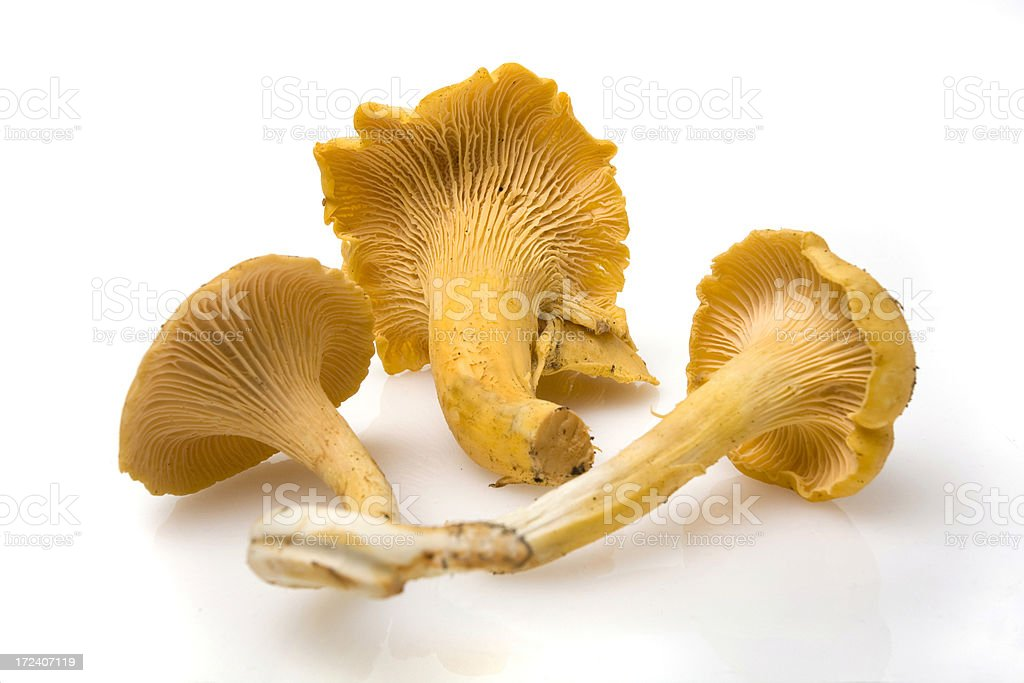 Golden Chanterelle Mushroom royalty-free stock photo