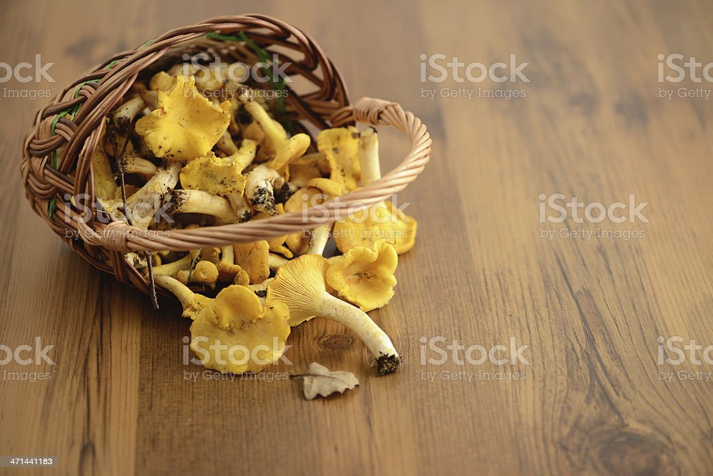 golden chanterelle mushroom stock photo