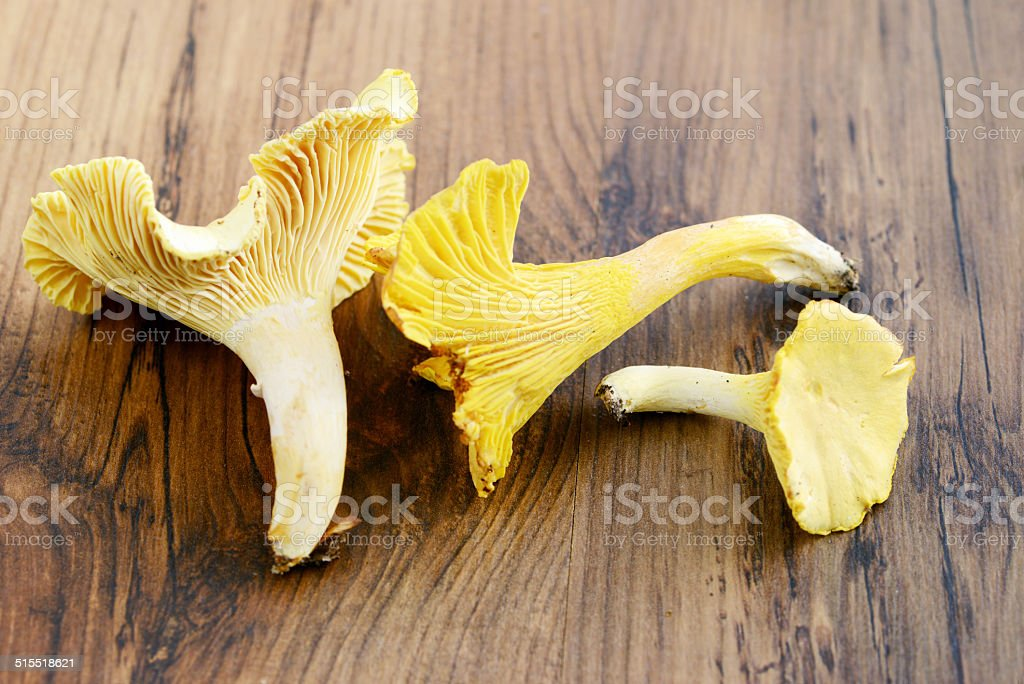 golden chanterelle stock photo