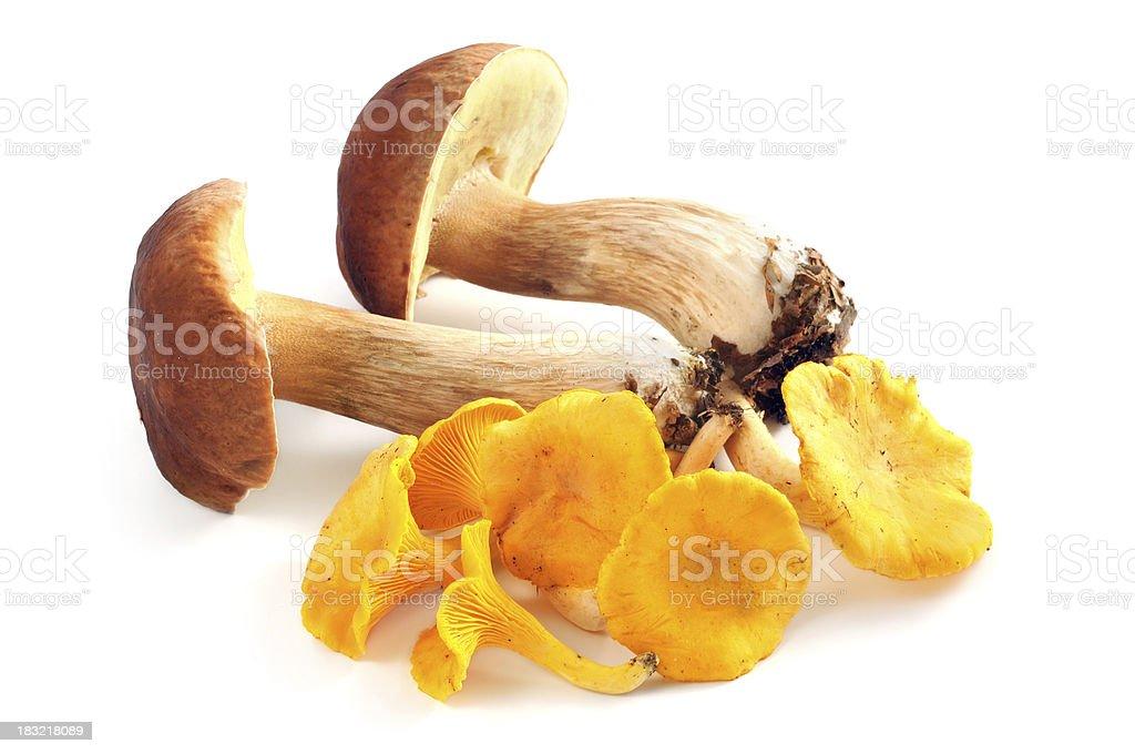 golden chanterelle (Cantharellus cibarius) - Steinpilz (boletus edulis) porcini mushroom royalty-free stock photo