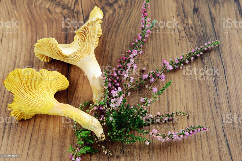 golden chanterelle with heather stock photo