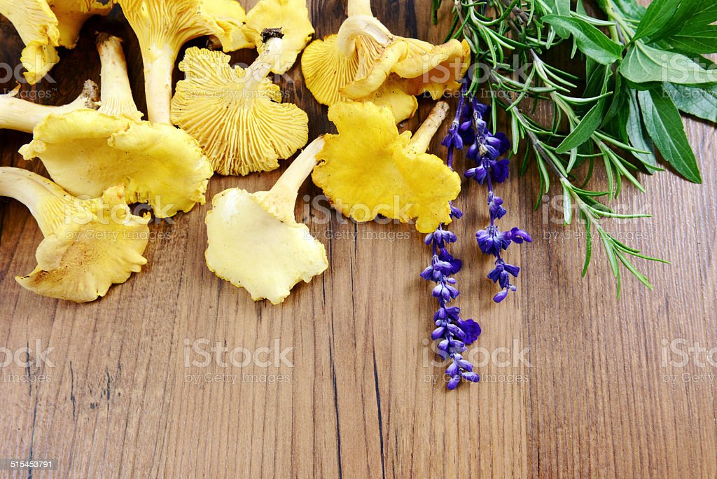 golden chanterelle with herbs stock photo