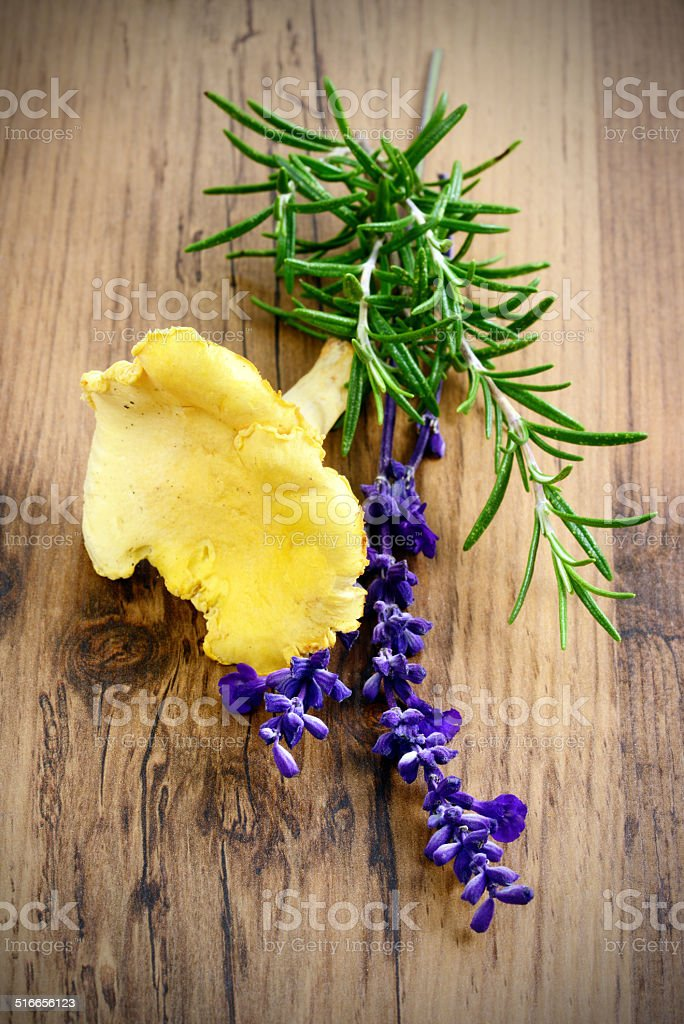 golden chanterelle with herbs stock photo