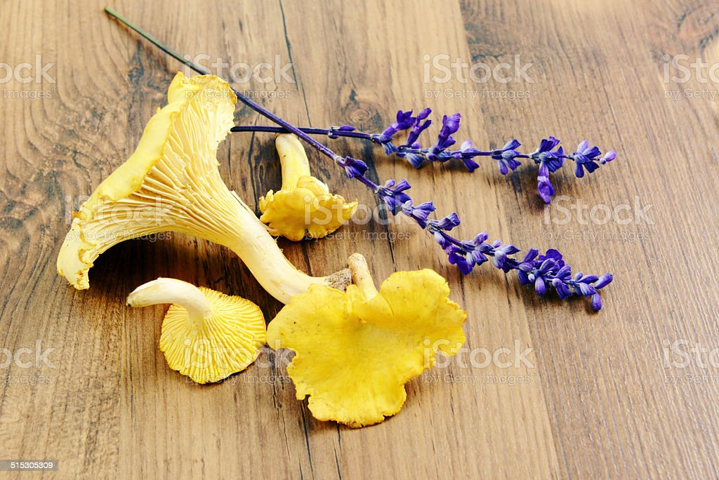 golden chanterelle with lavender stock photo