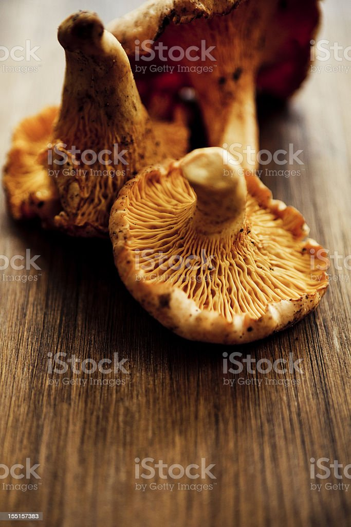 Golden Chanterelles stock photo