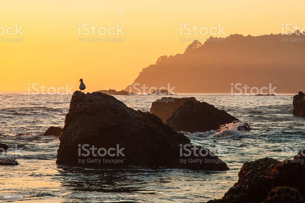 Golden coast stock photo