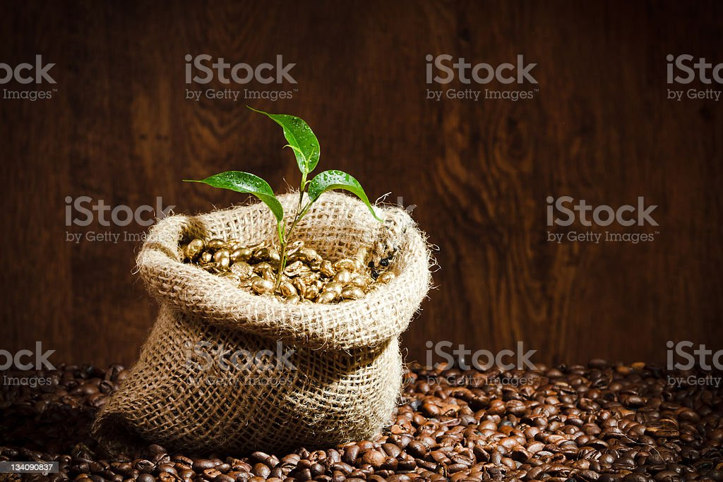 Golden coffee seed on sack with small plant royalty-free stock photo