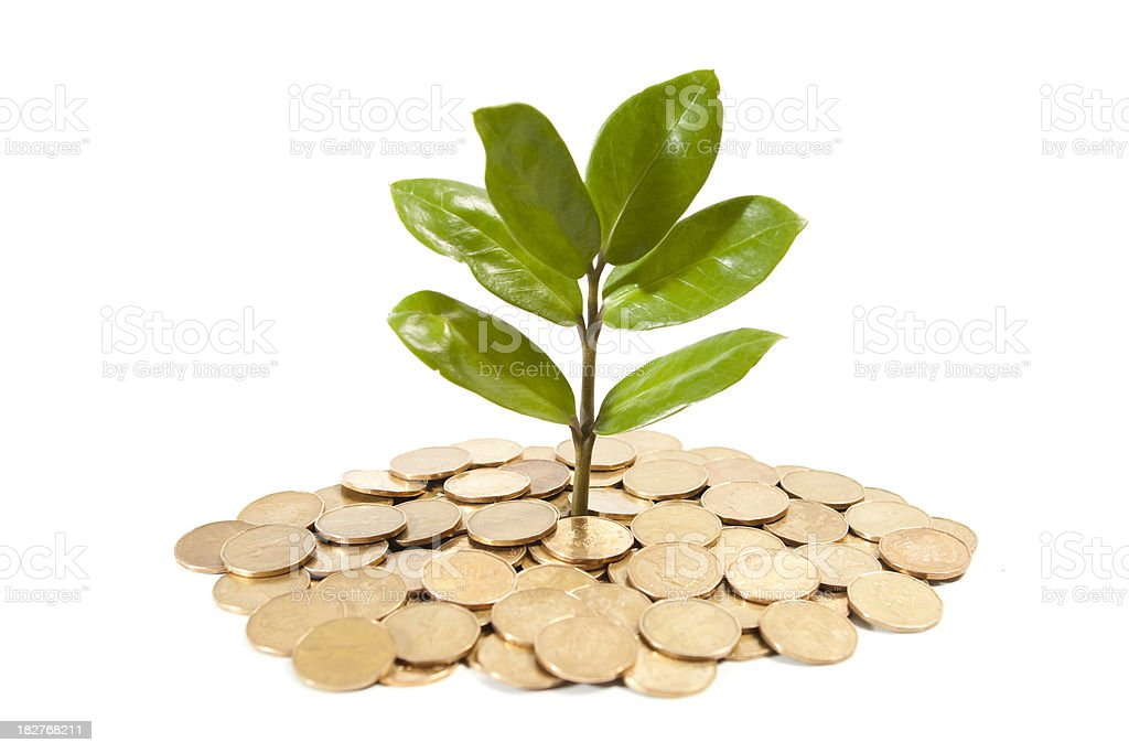 golden coins and plant. royalty-free stock photo