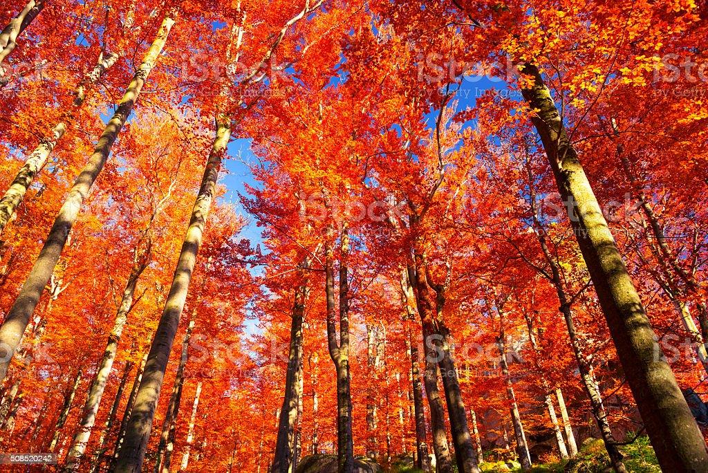 Golden colors of autumn stock photo