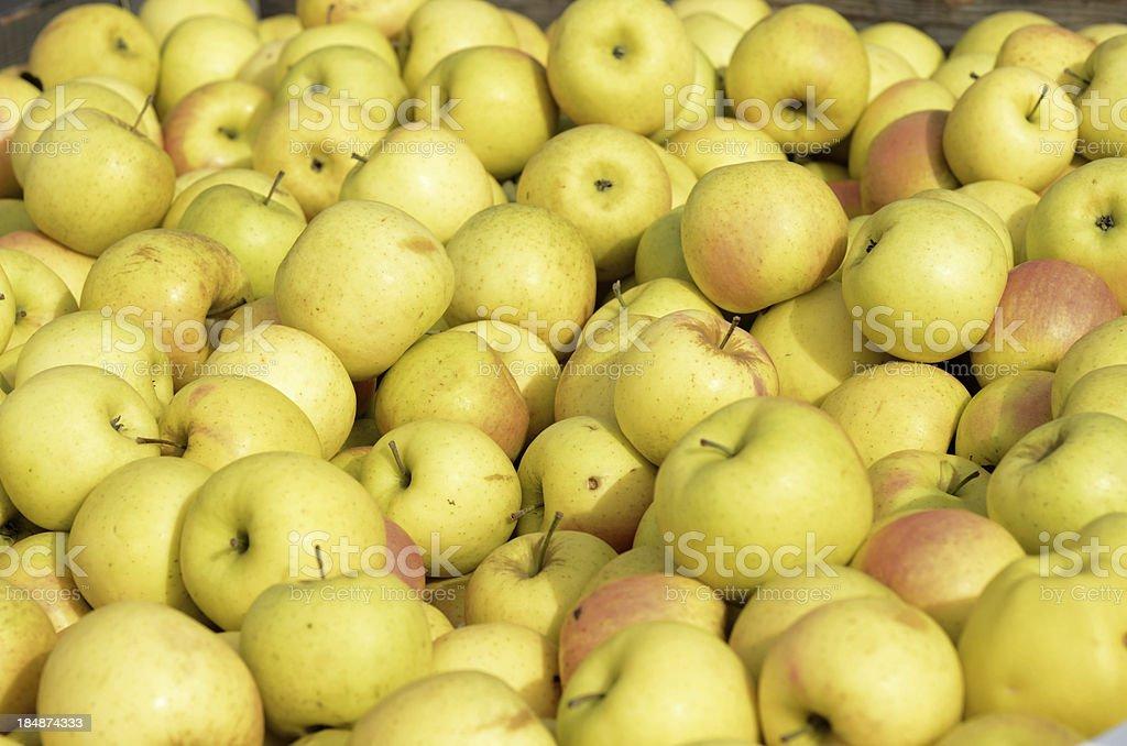 Golden Delicious Apples stock photo