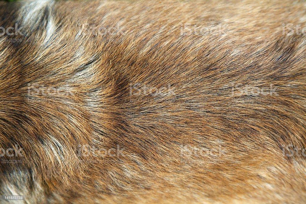 Golden dog fur stock photo