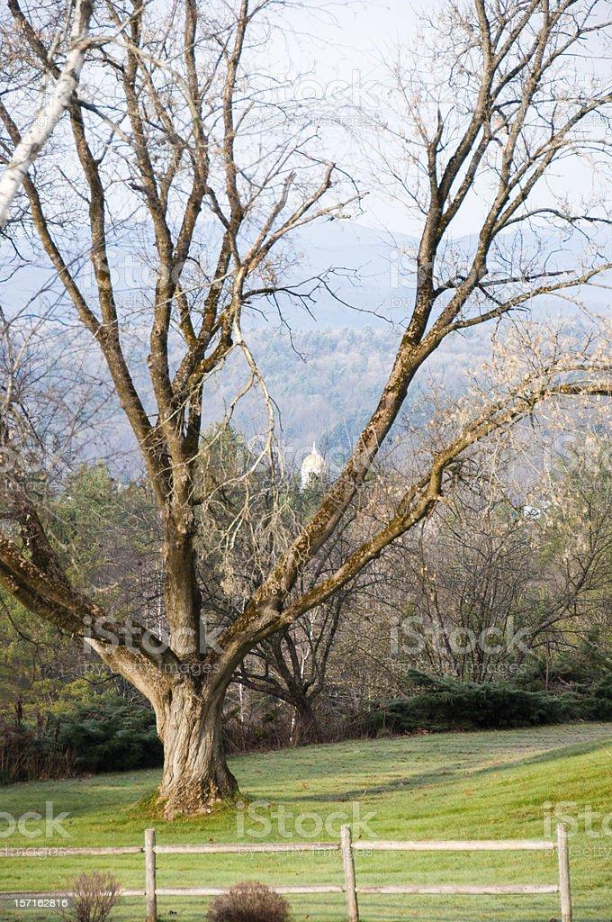 Golden dome through the trees stock photo