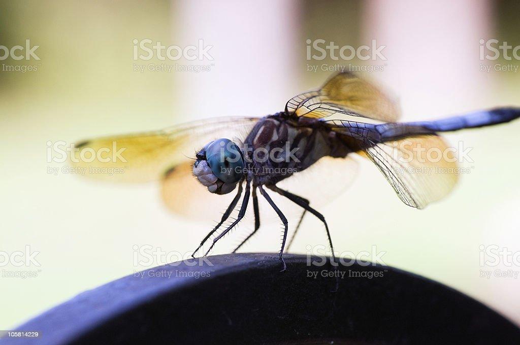 Golden dragonfly stock photo