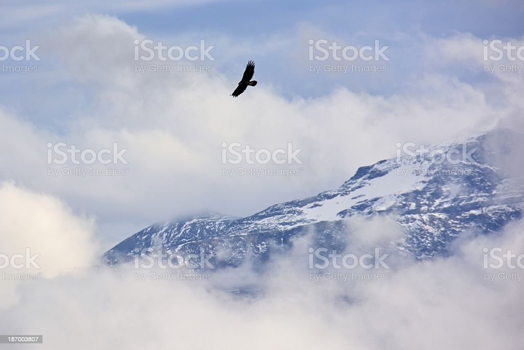 Golden Eagle seen from 2300m, central Switzerland stock photo