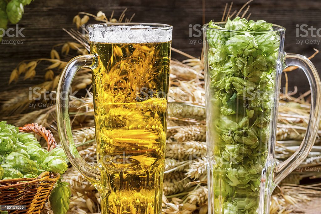 Golden ears in fresh beer and hops royalty-free stock photo