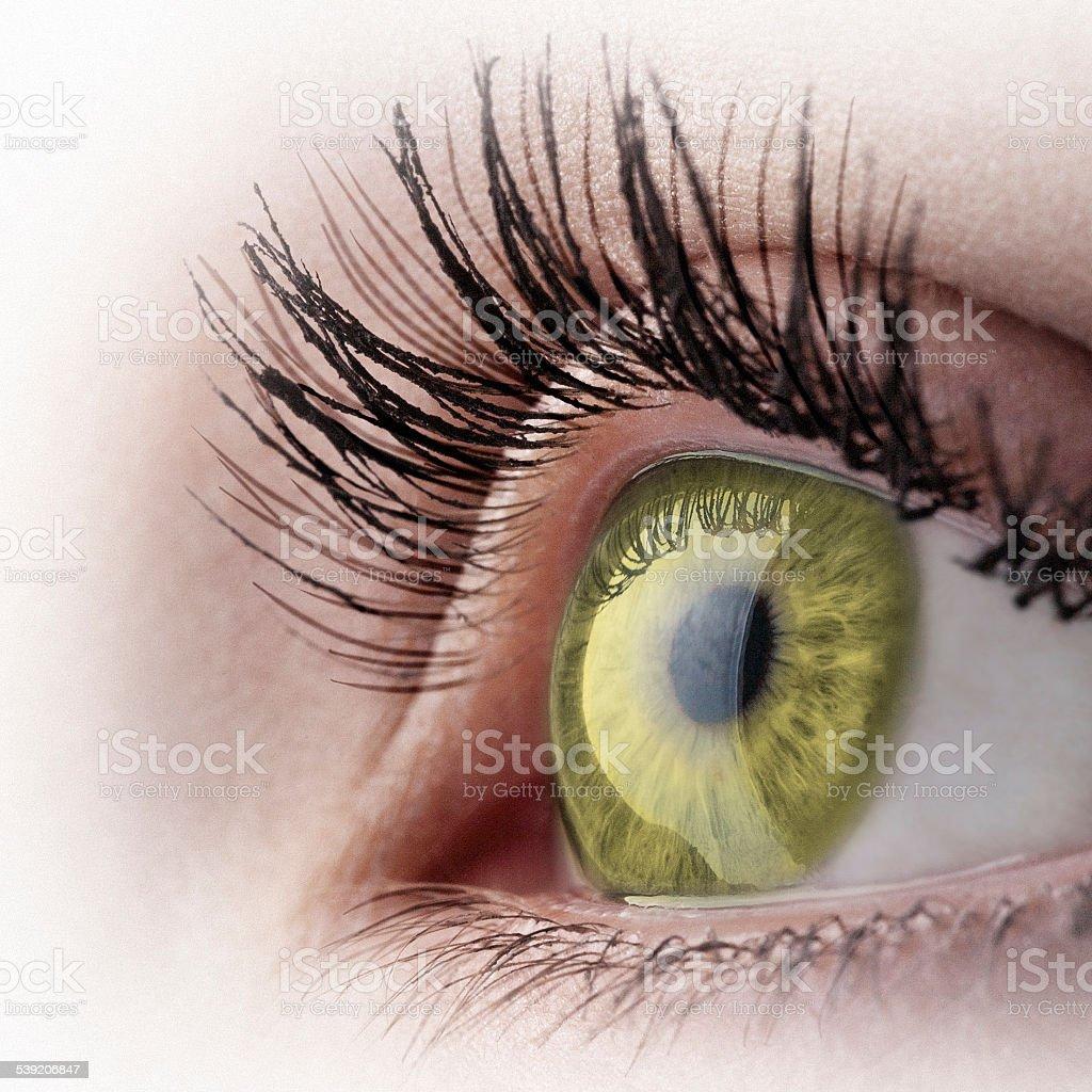 Golden eye stock photo