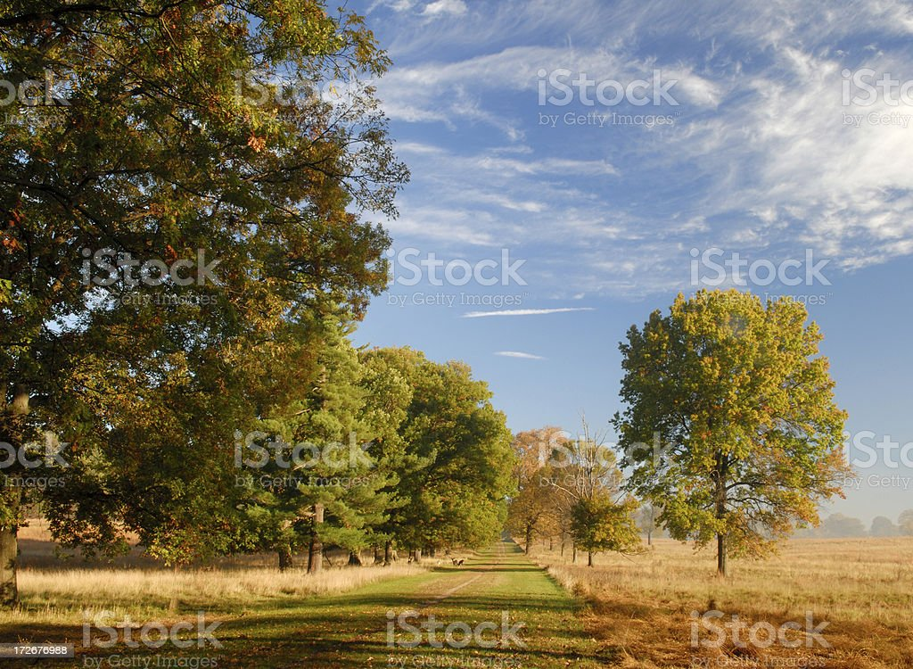 Golden Fall at Valley Forge royalty-free stock photo