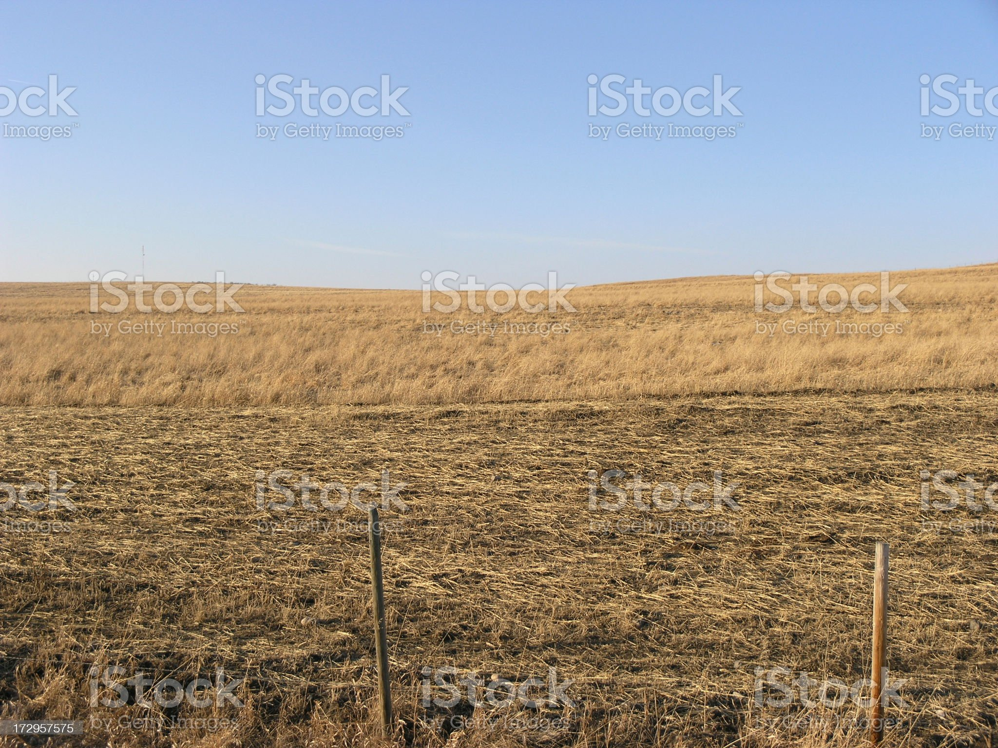 Golden Farming royalty-free stock photo