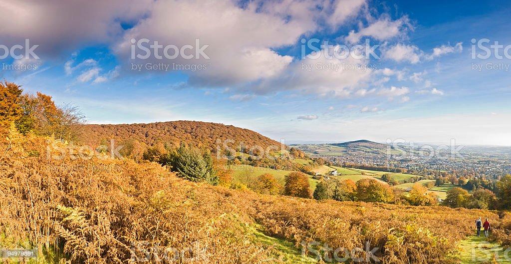 Golden fern landscape stock photo