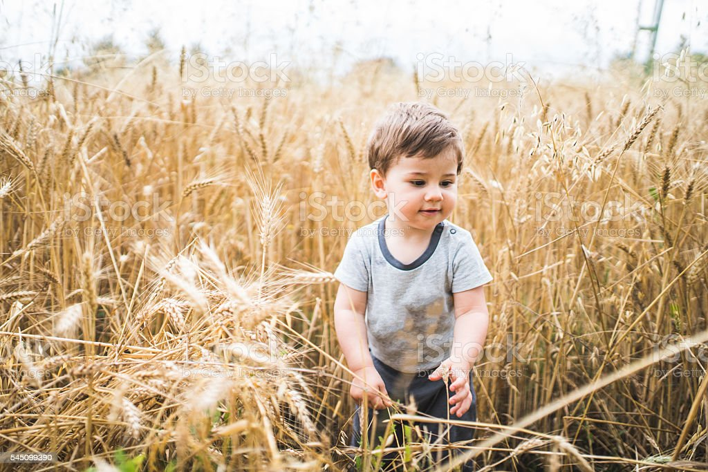 Golden field and the baby stock photo