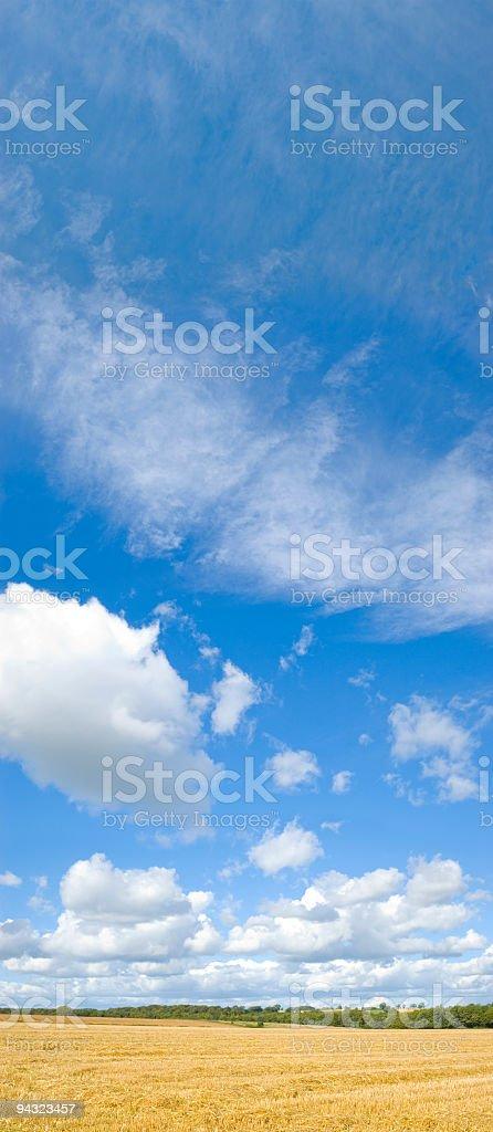 Golden fields, blue skies royalty-free stock photo