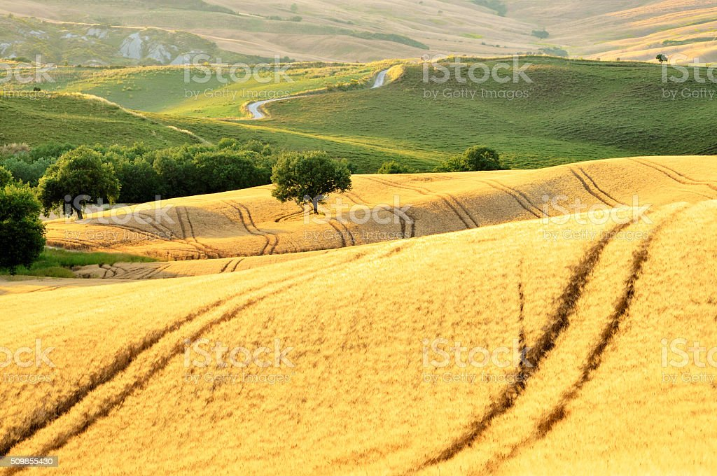 Golden Fields of Tuscany, Val d'Orcia, Italy stock photo