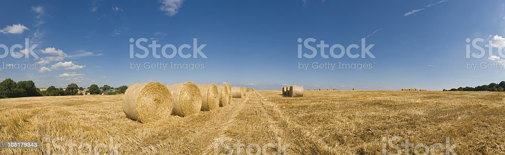 Golden fields royalty-free stock photo