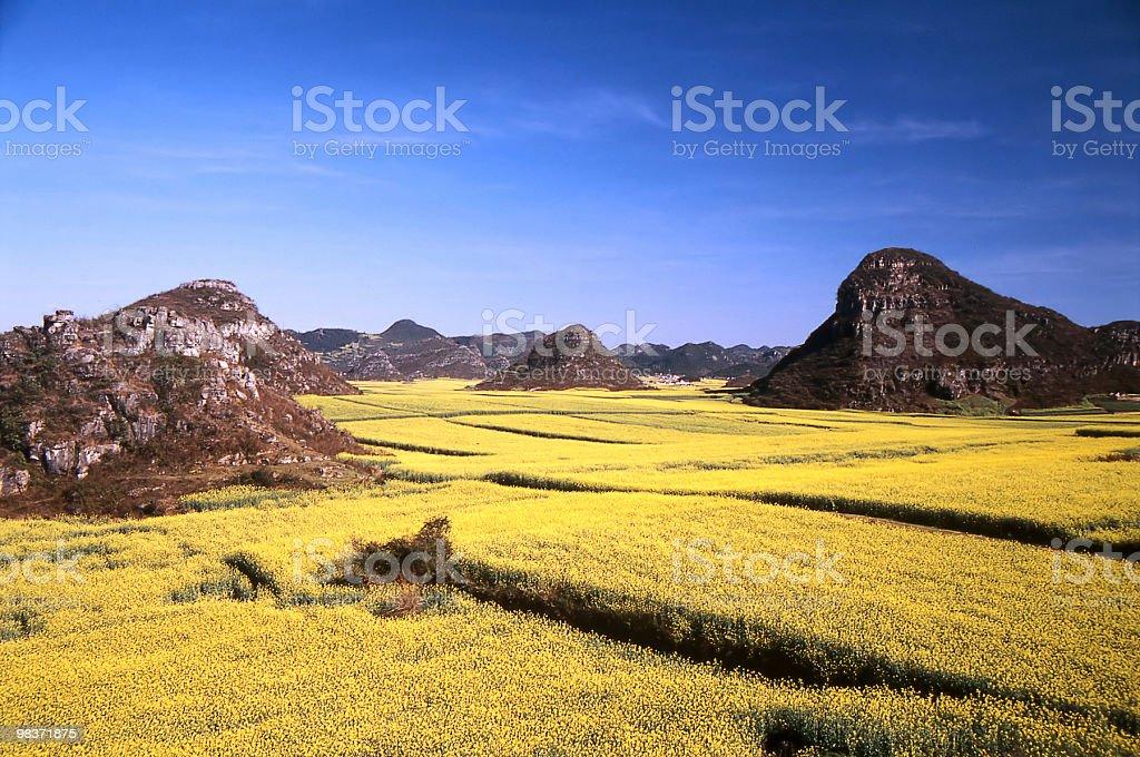 golden fields stock photo