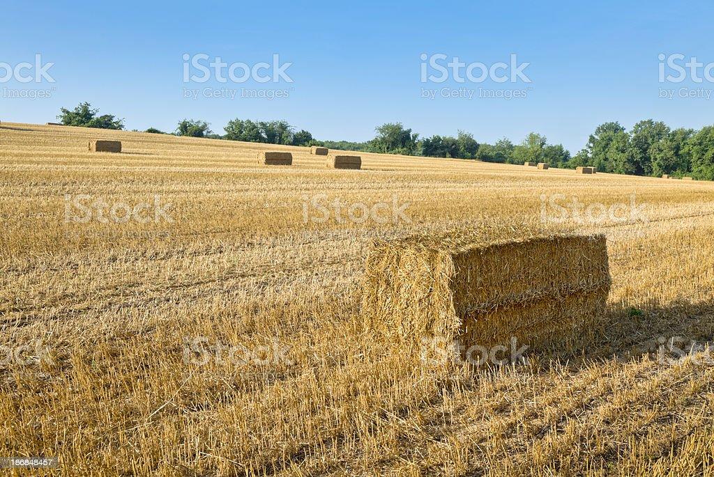Golden Fields with Rectangular Hay Bales stock photo