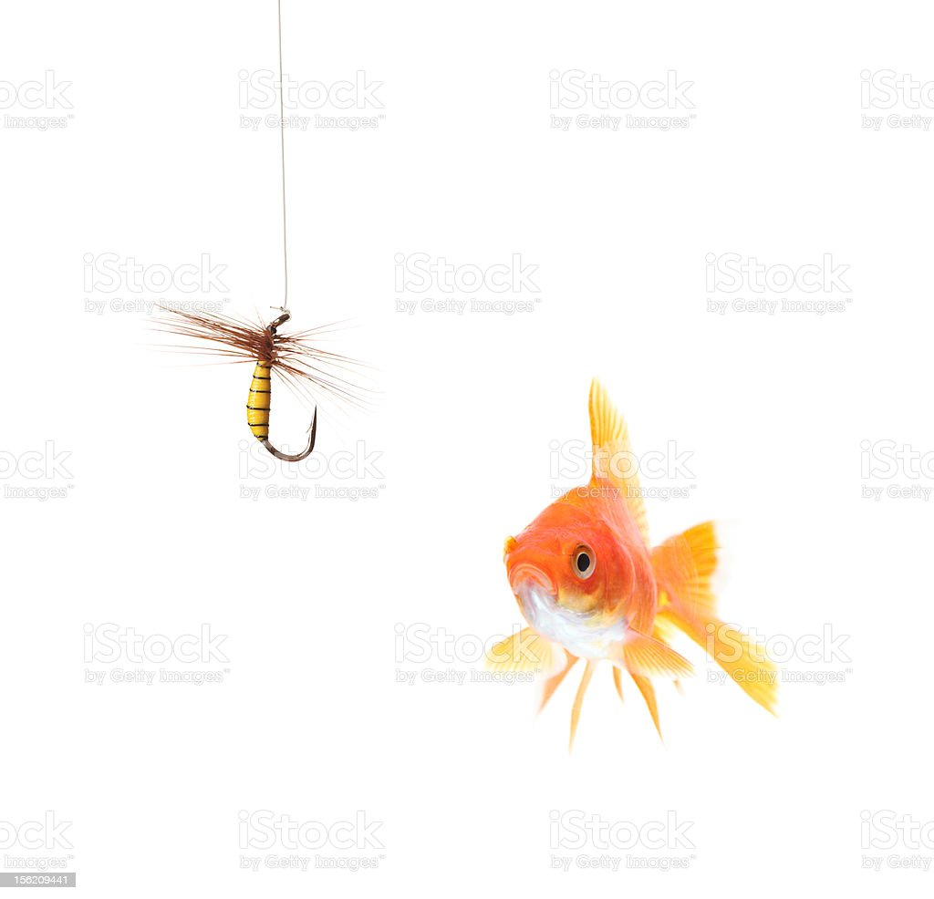 Golden fish and a fishing hook stock photo