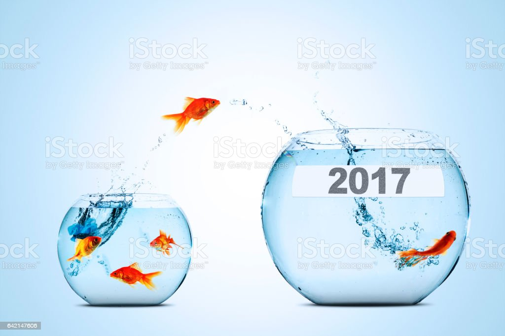 Golden fish leaping to larger fishbowl stock photo