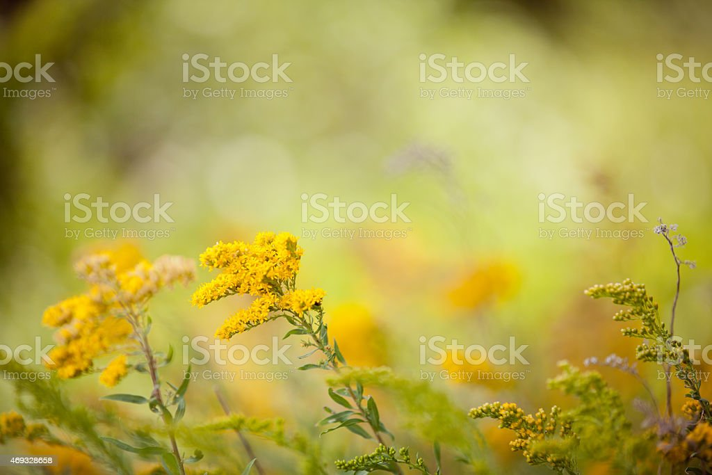 Golden Flowers and Plants stock photo