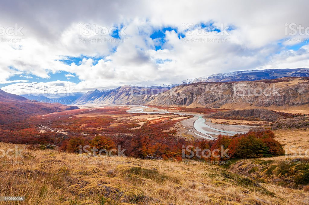 Golden forest in Patagonia stock photo