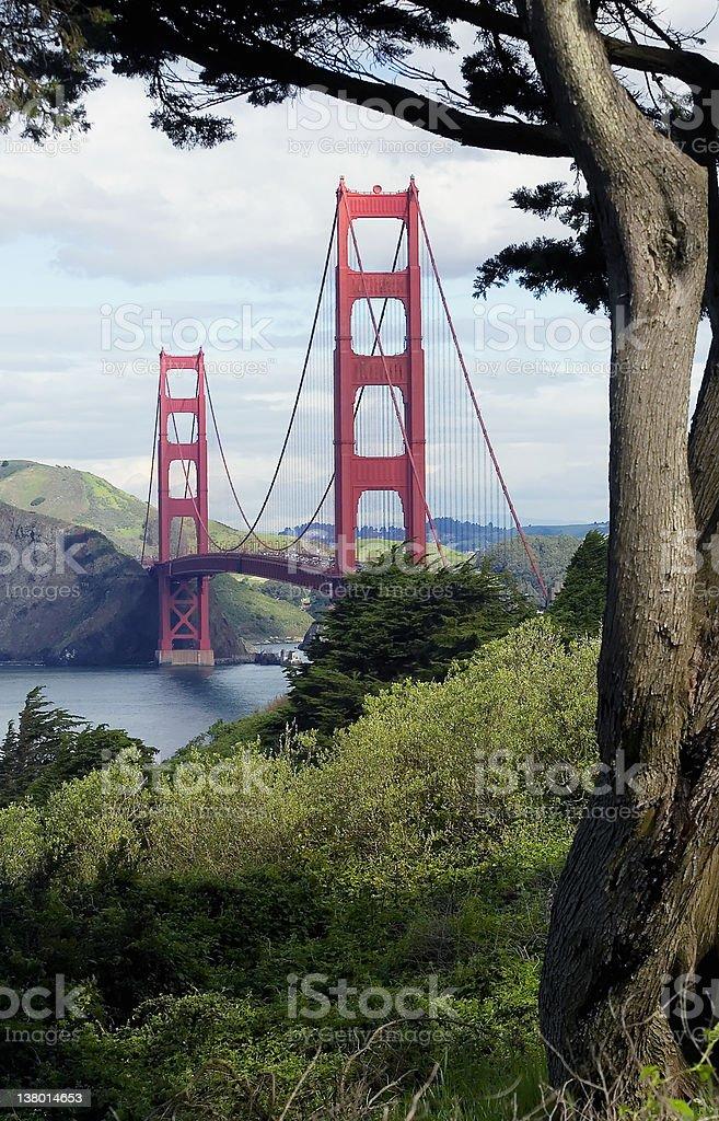 Golden Gate Bridge framed by tree royalty-free stock photo