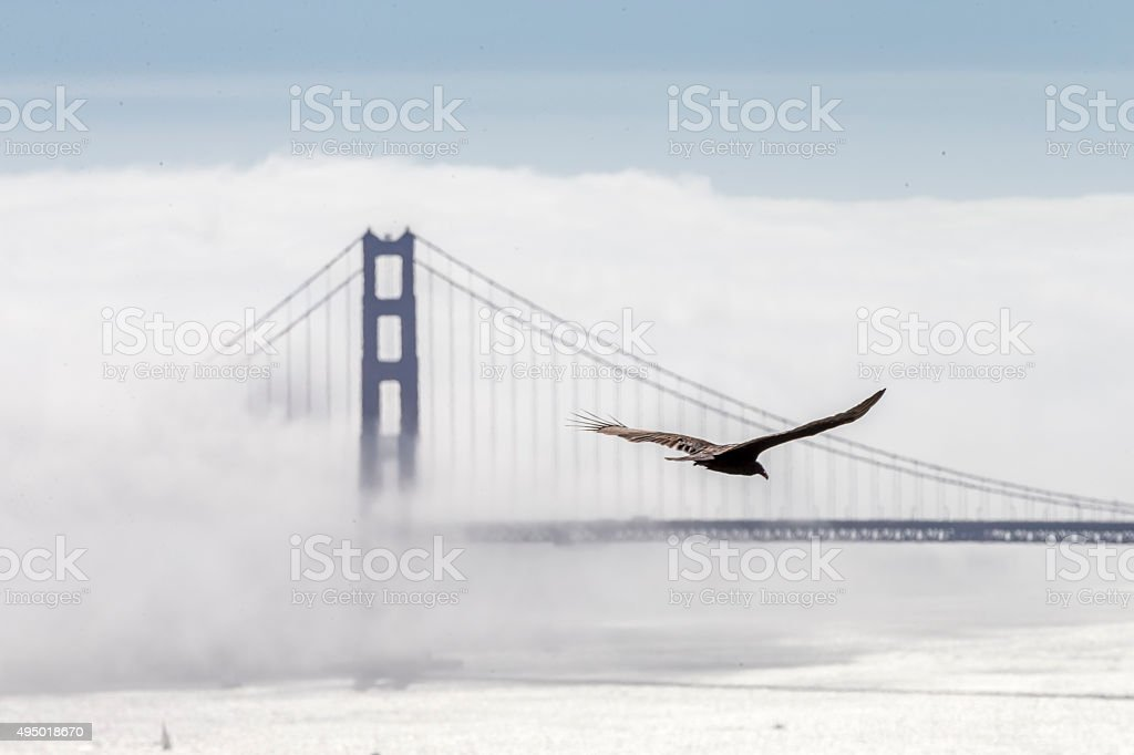 Golden Gate Bridge with low fog, San Francisco stock photo