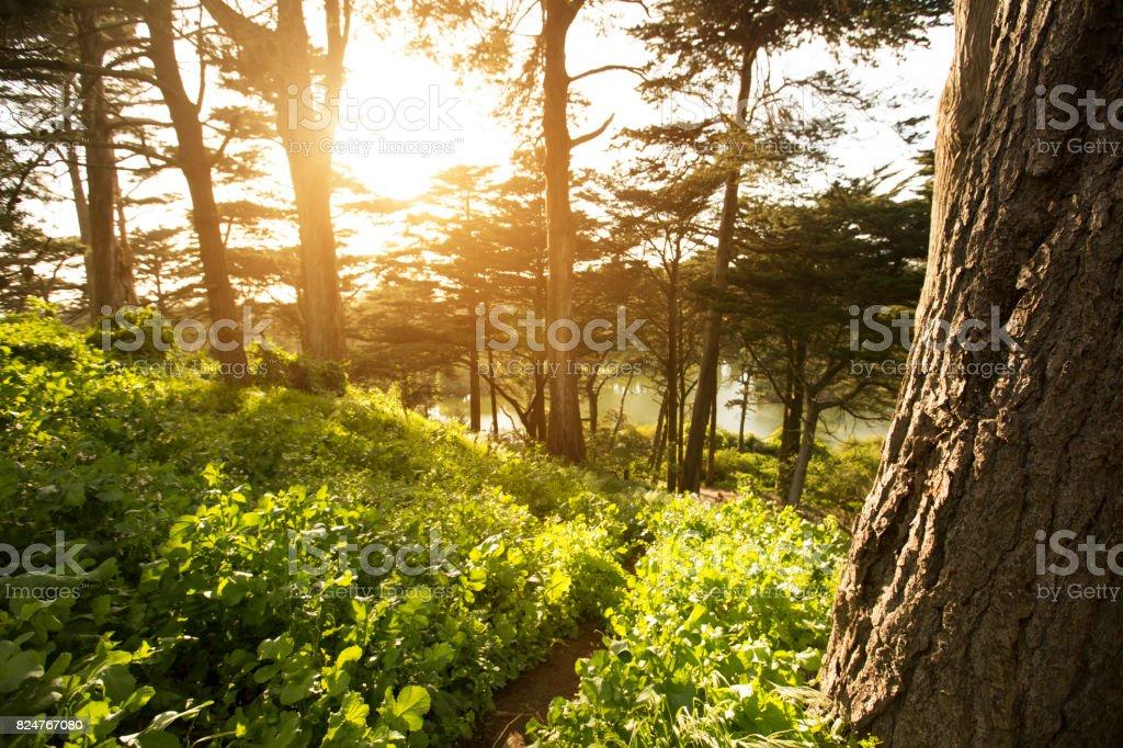 Golden Gate Park stock photo
