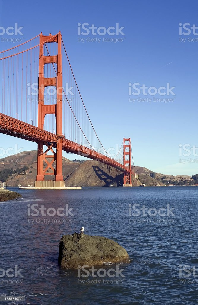 Golden Gate with Seagull royalty-free stock photo