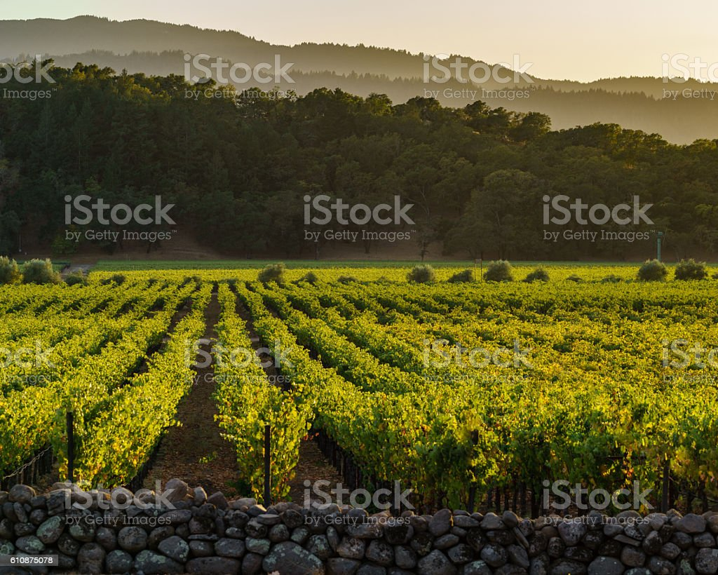 Golden glow of Napa Valley vineyards and hills at sunset stock photo