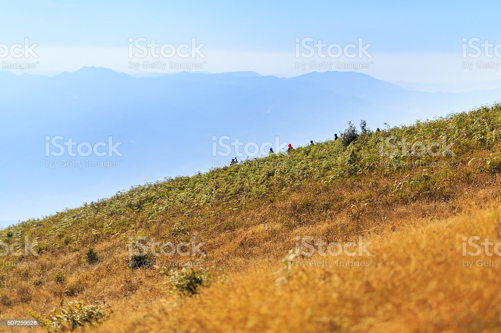 golden grass field at Doi inthanon in Chiangmai province,Thailand stock photo
