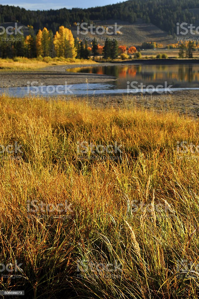 Golden grass in fall in the Grand Tetons royalty-free stock photo
